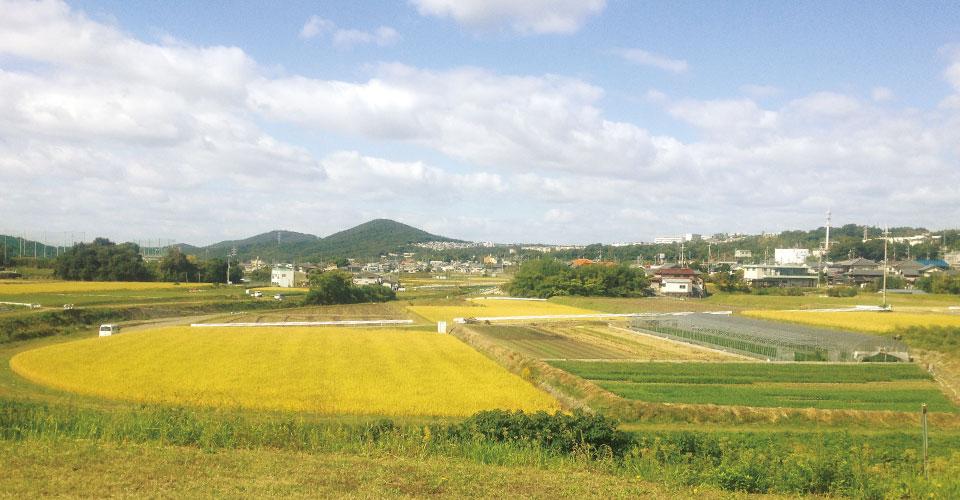 陽 だまり 農園